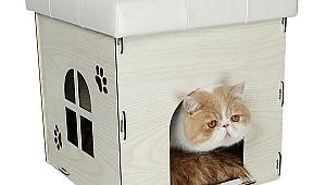 Kedi Yatağı, Kedi Tasması ve Kedi Taşıma Çantası Nasıl Seçilir?