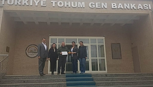 """""""Abhaz Mısırı"""" Türkiye Tohum Gen Bankası'na teslim edildi"""
