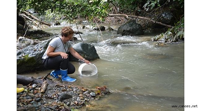 Akçay Deresini Nesli Tükenmekte Olan 750 kırmızı Benekli balık Salındı