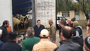 Genç Çiftçi Projesi Kapsamında 340 Koyun Dağıtıldı