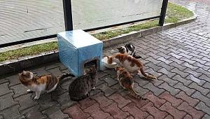 AK Gençlik'ten Sokak Hayvanları İçin Seferberlik