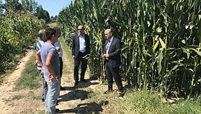 İYİ Parti'den mısır çiftçisine destek