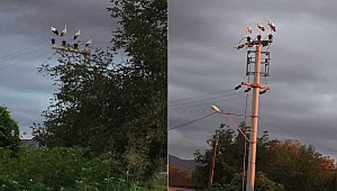 SEDAŞ Enerji Verirken Leyleklerin Güvenliğini De Dikkate Alıyor
