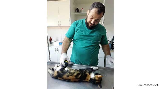 """""""Karasu Belediyesi, Sokak HayvanlarınaYönelik Veterinerlik Hizmetlerine Devam Ediyor"""""""