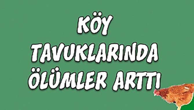 KÖY TAVUKLARINDA ÖLÜMLER ARTTI!!!