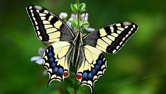 SAGÜSAD üyesi Köseoğlu'nun kelebekleri Bosna'da sergilenecek