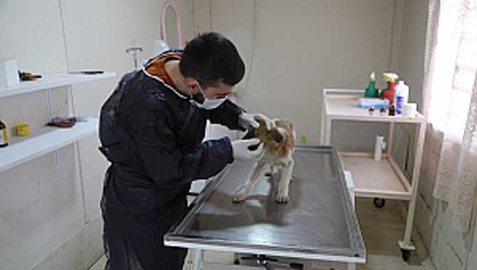 Sapanca Belediyesi, hayvanların tüm bakım işlemlerini yapıyor