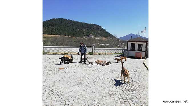 Sokağa çıkma yasağında sokak hayvanlarını unutmadılar