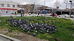 Sokak hayvanlarına Büyükşehir desteği