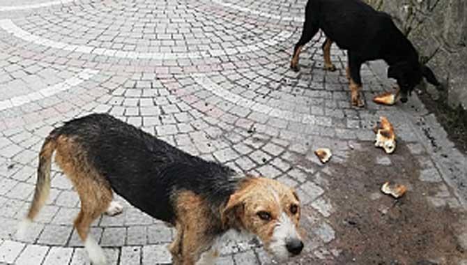 Taraklı Belediyesi sokak hayvanlarına yiyecek bırakıyor