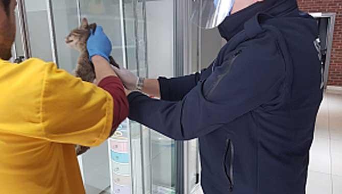 Yaralı Kedinin İmdadına Serdivan Belediyesi Yetişti
