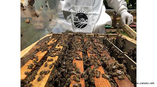 Arıcılık projesinde üretimler başladı