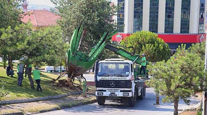 Büyükşehir o proje sahasındaki ağaçları koruma altına alıyor
