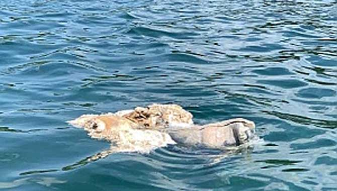 Sapanca Gölü'nde kurban atıkları temizlendi