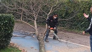 Sapanca'da Park Bahçelerden Güz Çalışması
