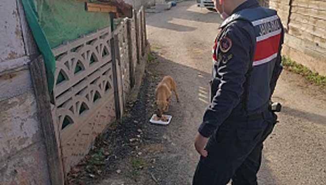 Jandarma Sokak Hayvanlarına yiyecek bıraktı