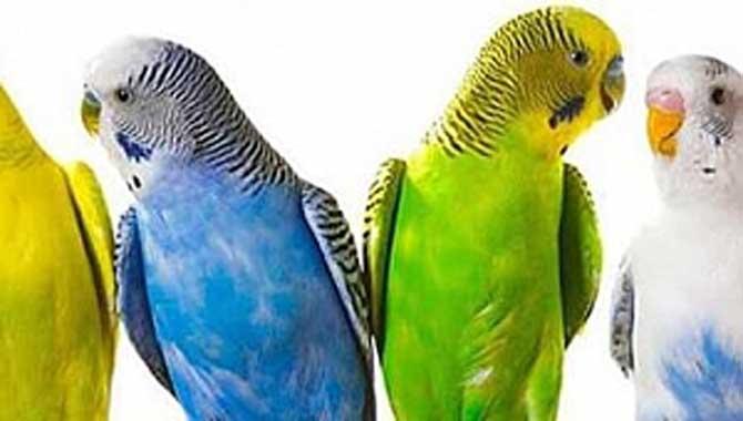 Kuş tüyü alerjisi nedir?