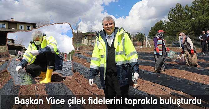 Başkan Yüce çilek fidelerini toprakla buluşturdu