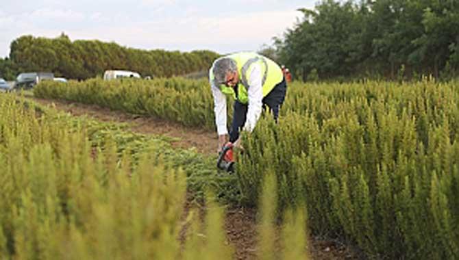 Tarım şehrimizin en önemli avantajlarından biridir