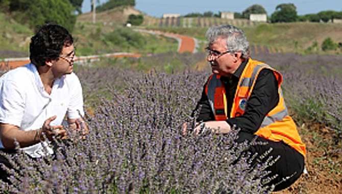 Büyükşehir yaptı, atıl alan aromatik bitkilerin üretim merkezine dönüştü