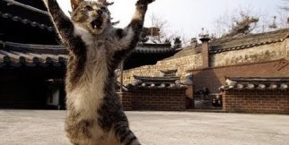Funny Ninja Cat Compilation