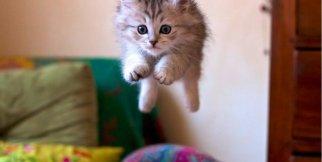 Komik Kedi Videosu, Komik Kediler